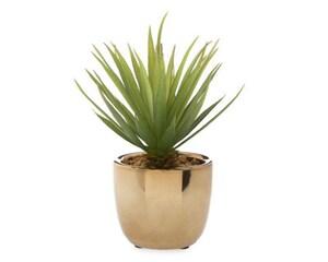 Planta Decorativa Serena